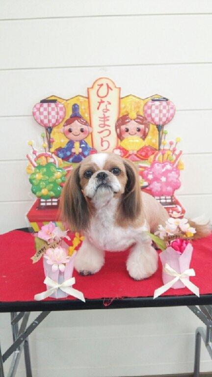 https://www.kamap.jp/db_img/cl_img/422/news/images/app_sQRG1y_201703232309.jpg