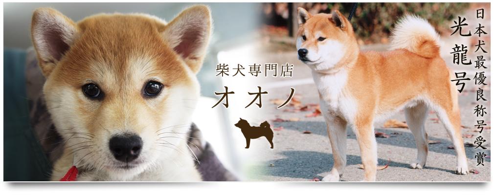 柴犬の画像 p1_8